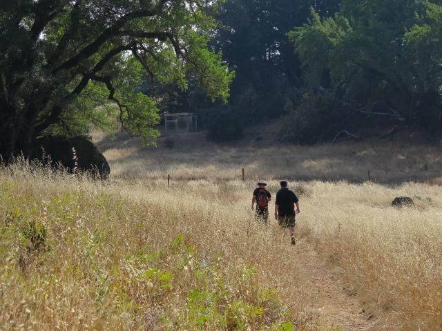 Walking through the meadow